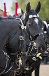 Blues and Royals at Horse Guards MOD 45162431.jpg