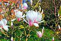 Blumen im Frühling.JPG