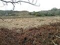 Bog near Tyddyn-du - geograph.org.uk - 623620.jpg