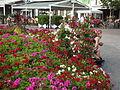 Bolzano flowers 2014 I.JPG