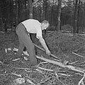 Bosbewerking, arbeiders, bomen, gereedschappen, Bestanddeelnr 251-9121.jpg
