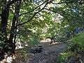 Bosque de Castaños en Otoño - panoramio.jpg