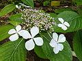 BotanicGardensPisa (47).JPG
