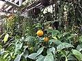 Botanische tuinen Utrecht 27.jpg