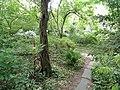 Botanischer Garten Freiburg - DSC06371.jpg