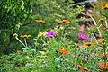 Botanischer Garten der Universität Zürich 2010-09-16 16-34-10.JPG