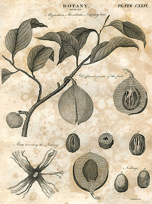 Botany plate 124 britannica 5th edition 1817 engraved by William Miller for William Archibald.jpg