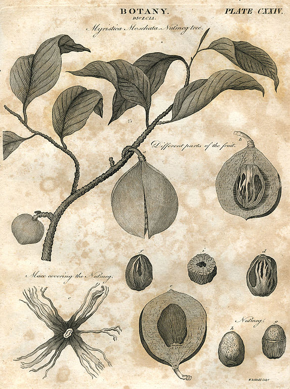 file botany plate 124 britannica 5th edition 1817 engraved by