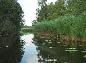 Vechtstreek - Lake Botshol, one of many lakes formed by peat extraction in de Vechtstreek