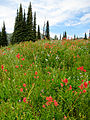 Boulder Lake Meadow Payette NF.jpg