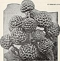 Bountiful Ridge Nurseries - your planting guide to better fruits and more beautiful homes for fall 1944 and spring 1945 (1944) (19784103014).jpg