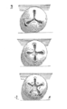 Bouton.sculpture.2.png