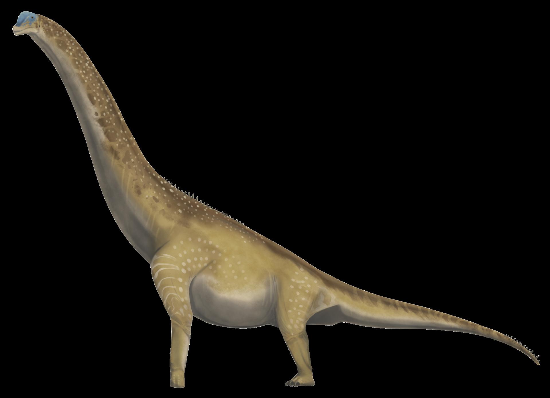 Brachiosaurus altithorax side profile.png