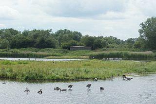 Brandon Marsh nature reserve in the United Kingdom