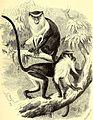 Brehms Tierleben - allgemeine Kunde des Tierreichs - mit 1800 Abbildungen im Text, 9 Karten und 180 Tafeln in Farbendruck und Holzschnitt (1890) (20388085256).jpg
