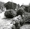 Breme sena jemlje na hrbet, da ga bo nesel na skedenj. Dolenja Borjana 1951.jpg