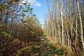 Bridleway through Hurst Wood - geograph.org.uk - 1570657.jpg
