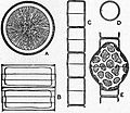 Britannica Diatomaceae 1.jpg