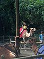 Bronx Zoo 003.jpg