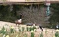 Brookgreen Gardens 45 (3333269876).jpg