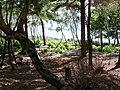 Brownsea Island, sea view through trees - geograph.org.uk - 1445892.jpg