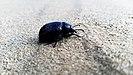 Bug on the sand.jpg