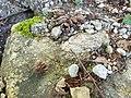 Burgstelle Spisegg Steine und Mörtel.jpg
