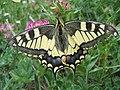 Butterfly 2 (59929388).jpeg