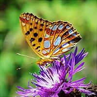 Butterfly a.jpg