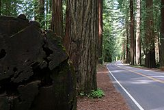 CA 254 Avenue of the Giants.jpg