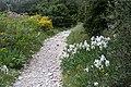 Calvisson-Chemin de Nogaret-20160413.jpg