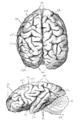 Cambridge Natural History Mammalia Fig 275.png