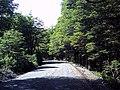 Camino al refugio del volcán Llaima en Parque Nacional Conguillio (febrero 2011) - panoramio (2).jpg