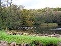 Canada Geese, Frensham Great Pond - geograph.org.uk - 1574965.jpg