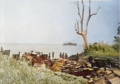 Cape Hoskins, before Battlle of Open Bay (colour).png