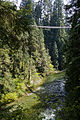 Capilano Suspension Bridge2.jpg