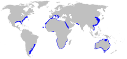 Range of the grey nurse shark (in blue)