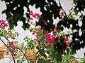Carrizales, Hatillo, Puerto Rico - panoramio (2).jpg