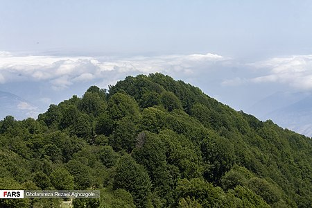 Caspian Hyrcanian Mixed Forests in Northern Iran 08.jpg