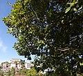 Castello di Viggianello ( Basilicata) 05.jpg