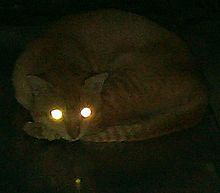 Cat's eyes glowing in the dark.jpg