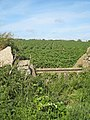 Cattle trough in the hedge near Downs Barn Farm - geograph.org.uk - 1326535.jpg