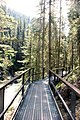 Catwalks at Johnston Canyon (29676789315).jpg