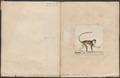 Cercopithecus petaurista - 1700-1880 - Print - Iconographia Zoologica - Special Collections University of Amsterdam - UBA01 IZ19900116.tif