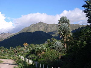 Sierras Pampeanas - Trithrinax campestris forest,s near Papagayos