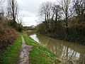 Chesterfield Canal, upstream of Dog Kennel Bridge - geograph.org.uk - 1780697.jpg
