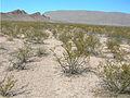 Chihuahuan Desert 01.jpg