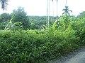 Cho Po Ro, Kra Buri District, Ranong 85110, Thailand - panoramio (17).jpg