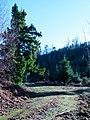 Christmas Tree For Next Season - panoramio.jpg