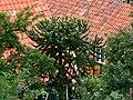 Ciekawa roślina - panoramio.jpg